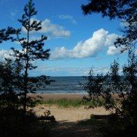 море, пляж :: linnud