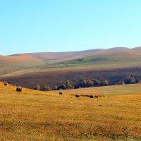 Осень в Приэльбрусье. :: Vladimir 070549