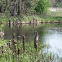 Царство водяного :: Тамара Лисицына