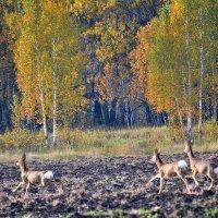 Осенний кросс :: Геннадий Ячменев