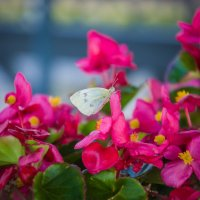 Флора и фауна :: Анастасия Климова