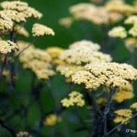 городские цветы-роскошь простоты :: Олег Лукьянов