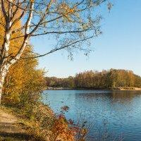 Золотая осень в парке 7 :: Виталий