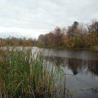 На озере пасмурно :: марина ковшова