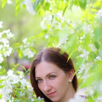 Цветение яблони :: Катерина Кучер