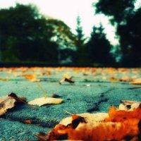 Осень :: Вадим Шинкарь