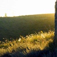 Вечерняя трава :: Елена Колмыкова