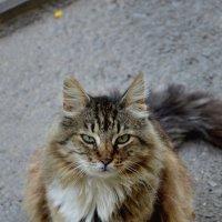 Меня зовут Брысь!! :: Игорь Попов