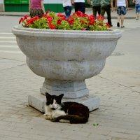 Городские цветы :: Игорь Попов