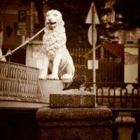 Львы :: Ксения Есипова