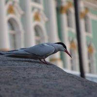 Чайка :: Ксения Есипова