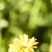 Цветок :: Михаил Евгеньевич