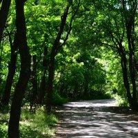 лес :: Юлия Бережная
