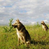 Охотничья стойка :: Валерий Струк