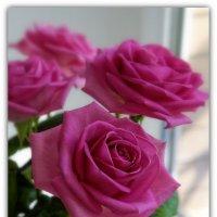 Розы :: Александр Гапоненко
