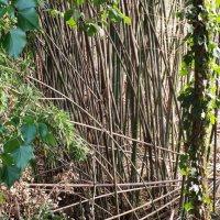 бамбук :: Андрей F