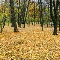 Пора листопадная :: Александр Бурилов