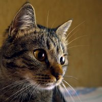 кошка :: Даниил Глинский