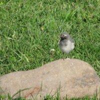 Птичка :: Светлана Ковалева