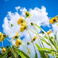 Дотянуться до солнца, дотянуться до неба...... :: Ангелина Хасанова