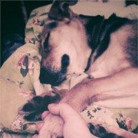 Лиза :: Sleepy Raccoon