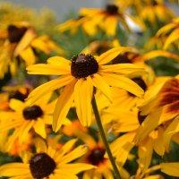 Цветы :: Олеся Кази