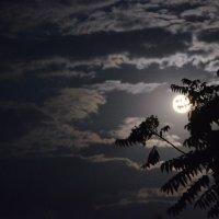 Луна :: Игорь Попов