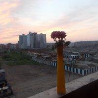 Три нежных розовых цветка :: Татьяна Юрасова