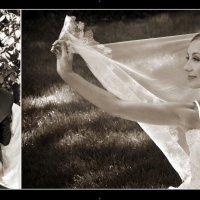 Ах, эта свадьба... :: Светлана Диканская