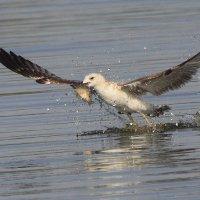 Без труда, не выловишь и рыбку из пруда... :: Марк Бабич