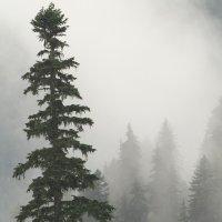 Туман :: Елена Шмелькова