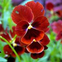 Цветок :: Наталия Зыбайло