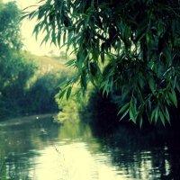 Озеро :: Анна Сурина