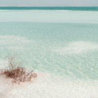 Мертвое море.....вчера :: Lidiya Dmitrieva