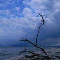 Море... :: Lina Liber