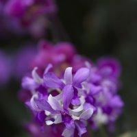 Орхидея :: Igor Pavlyuk