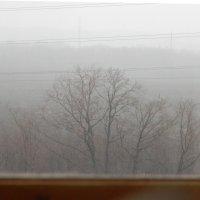 ранний декабрь :: Ольга Yarmolchik