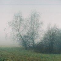 туман снаружи,туман внутри :: Виктория Рока
