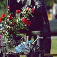 цветы :: Александр Касаткин