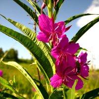 Цветок :: Радмир Арсеньев