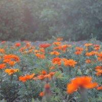 цветочная поляна :: Виктория Верховод