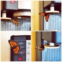 Оказывается, бабочки тоже любят кофе... ))) :: Елена Мягкова