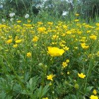 Полевые цветы :: Татьяна Юрасова