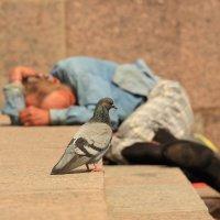 Одинокий голубь :: Алексей Власов