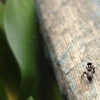Маленький муравей :: Allen Pirs