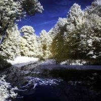 IR-рациональный лес :: Григорий Храмов
