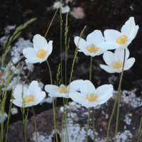 Цветы и камень. :: Наталья Юрова
