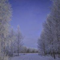 Зимняя дорога :: Александр Сидоренков