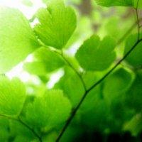 Зелень :: Алина Лысова