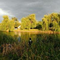 А на том берегу ивы в воду глядят... :: Александр Бурилов